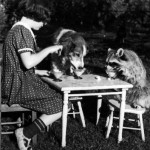 1930_A-girl-has-tea-with-her-pet-dog-and-raccoon-Massachusetts-1930-520x397