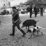 1955_A-man-walks-his-pet-dog-and-pet-boar-US-1955-520x346