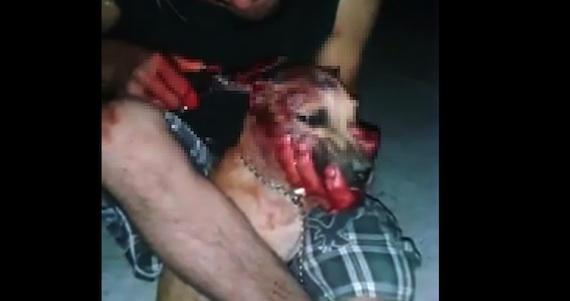 VIDEO exhibe a un individuo que mutila a perros en ...