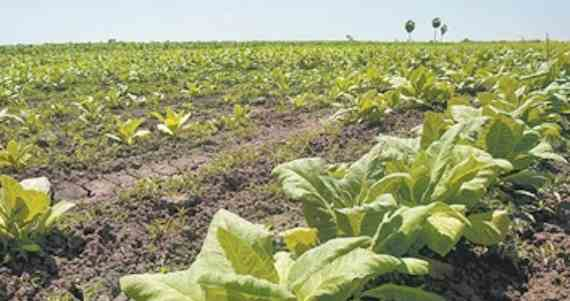Organizaciones campesinas temen que con la Reforma Energética se pierdan grandes superficies de tierras cultivables . Foto: Cuartoscuro