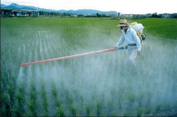 En México se usan plaguicidas cuyos efectos no están comprobados, denunció Rapam. Foto: forumvida.org