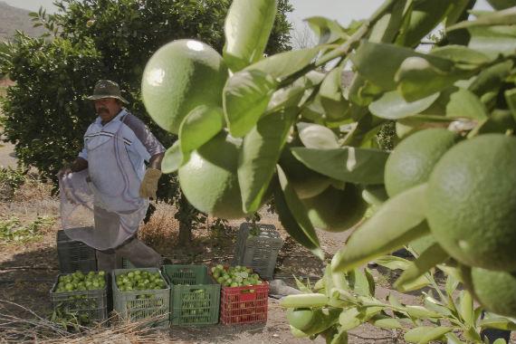 Los campesinos y los trabajadores del agro son uno de los sectores más suceptibles al daño de los plaguicidas. Foto: Cuartoscuro