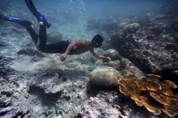 Vida_Marina_Ecosistema-4
