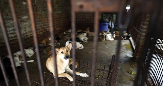 Foto de archivo tomada el 20 de septiembre de 2012 de varios canes enjaulados cerca de un puesto callejero de venta de carne de perro en un mercado de Hanoi (Vietnam). Foto: EFE