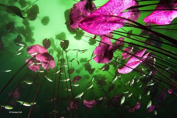 """Christian Vizl lleva una década fotografiando cenotes y en esta ocasión el reto fue """"equilibrar la luz artificial con la luz natural a fin de resaltar la textura de las hojas. Foto: Sitio Web del fotógrafo."""