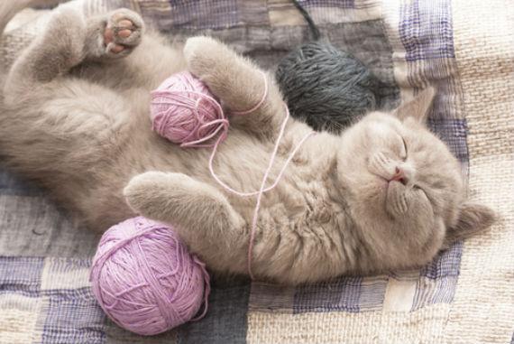 Resultado de imagen para Porque el jugar con el estambre puede ser peligroso para tu gato