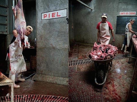 corte-de-cuerno-matadero-de-cabras