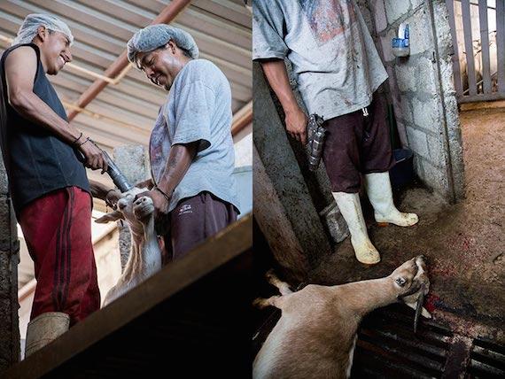 Matadero, Rastro de cabras en Tehuacán, Puebla, México. Octubre 2014, Foto: Tras Los Muros.