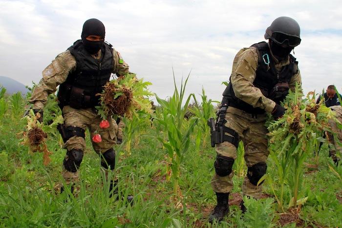 Las incautaciones de heroína, goma de opio y semillas de amapola han aumentado enormemente en un corto período de tiempo. Foto: Cuartoscuro.