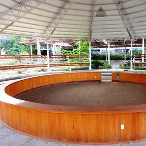 El palenque, forrado de madera, es una arena de lujo para la pelea de gallos. Foto Humberto Padgett SinEmbargo.