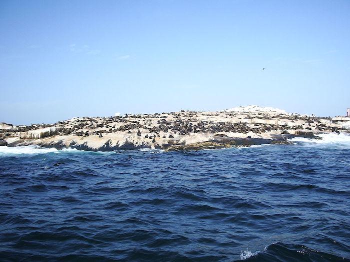 En algún momento de la historia, los humanos intentaron habitar en esta isla, pero en la actualidad únicamente es ocupada por las focas. Foto: Especial.
