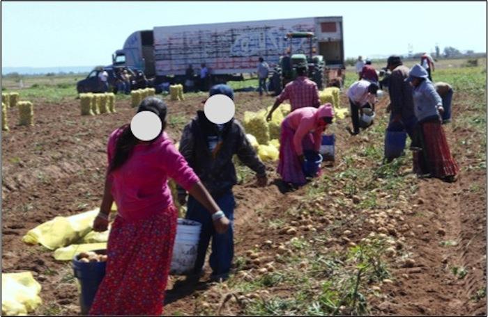 Entre los jornaleros rescatados se encontraban hombres, mujeres y niños. Foto: STPS.