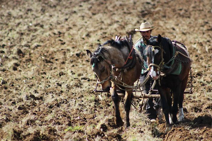 La economía centroamericana depende en gran medida de la agricultura. Foto: Cuartoscuro