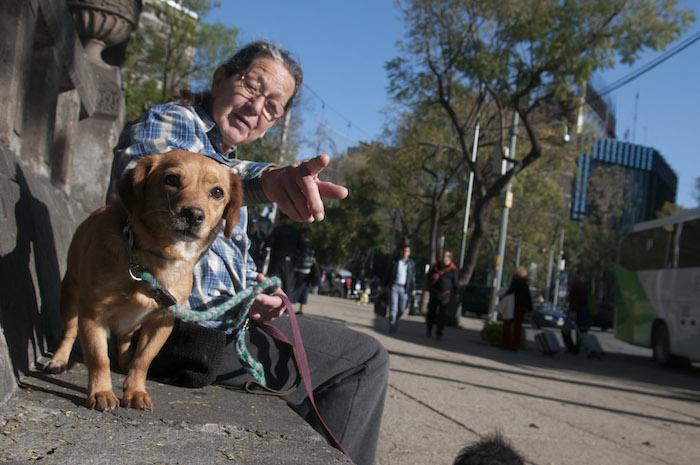 Legislaciones, servicios y cuidados que procuran la protección y el bienestar animal se lograron gracias a la labor de varias asociaciones, expertos, académicos y activistas en México. Foto: Cuartoscuro/Archivo.