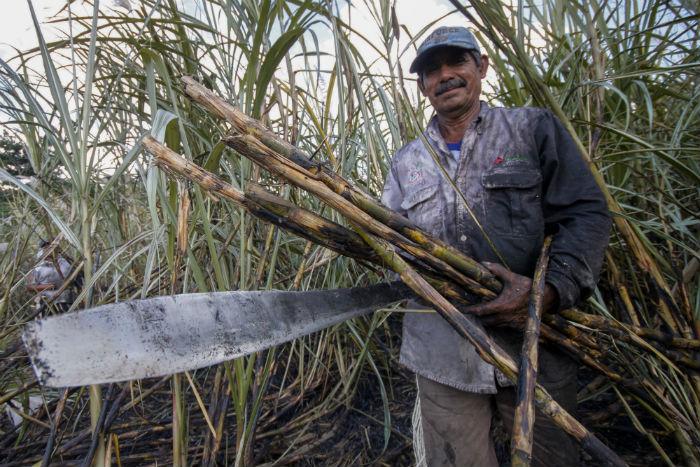 En este año, México se desprenderá de las últimas unidades azucareras de las que disponía. Foto: Cuartoscuro
