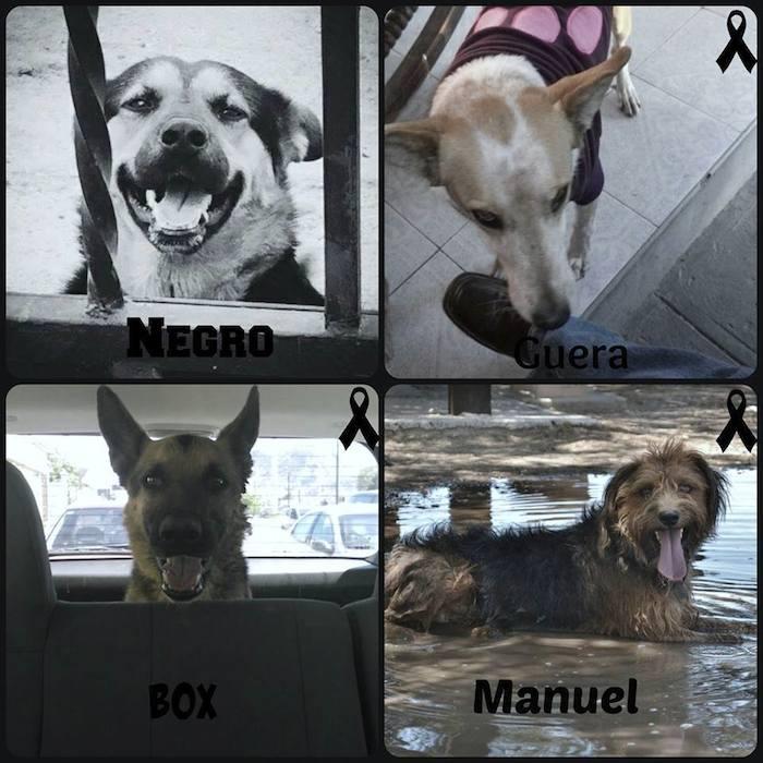 El o los asesinos de perros en Sonora prenden alarmas por crueldad y ...