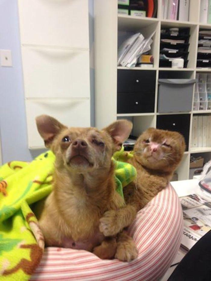 Foto: Facebook Hospital de Emergencias Animales y Cuidado Intensivo.