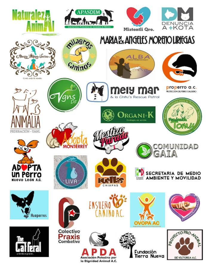 Organizaciones en defensa y protección de los animales firmantes del comunicado que denuncia la persistencia de irregularidades en Maskota. Foto: Especial