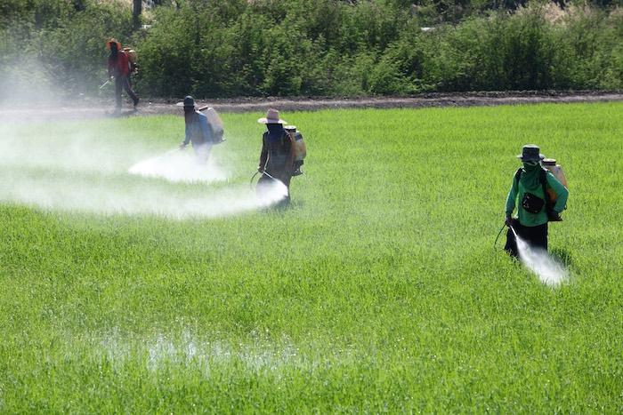 El glifosato fue patentado por la transnacional Monsanto. Foto: Shutterstock
