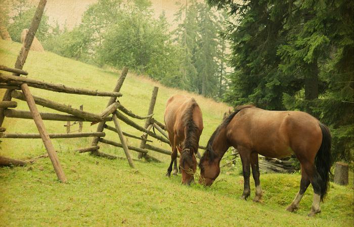 Los caballos son criados para fines domésticos antes que de consumo. Foto: Shutterstock