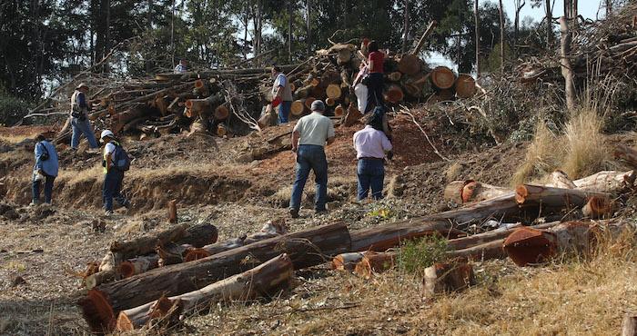 De acuerdo con Zúñiga, la ineficiencia de la actual regulación propicia la deforestación y degradación de los ecosistemas. Foto: Cuartoscuro