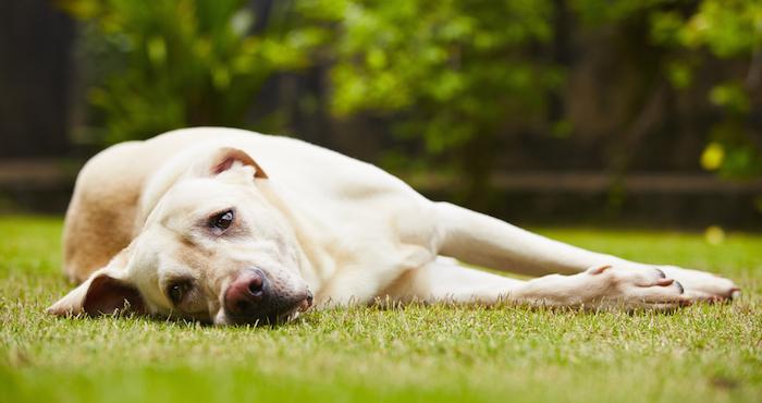Es importante prestar atención al comportamiento de nuestra mascota para detectar problemas emocionales Foto: Shutterstock