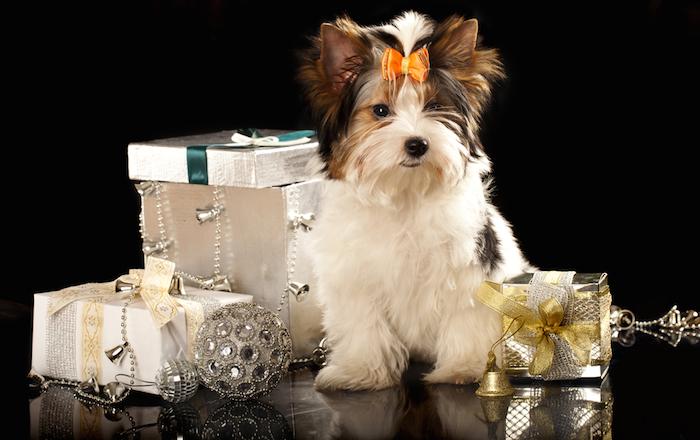 Ojo: tratar a tu perro como un ser humano no es muy buena idea