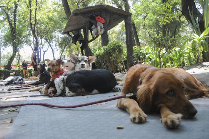 Desde finales de septiembre vecinos de la Condesa denunciaron el envenenamiento de perros en una calle aledaña al Parque México. Foto: Cuartoscuro