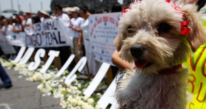 Imagen tomada durante una marcha en contra del maltrato animal. Foto: Cuartoscuro