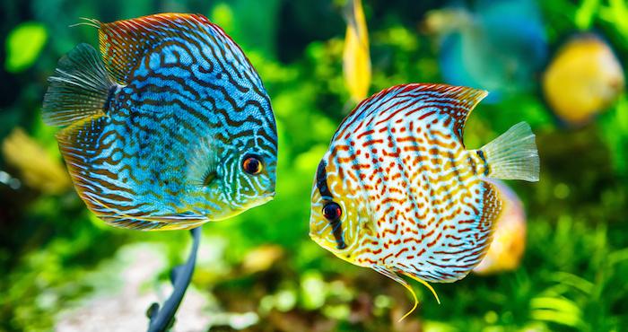 Quieres o tienes peces awf da algunos consejos para - Peces tropicales fotos ...