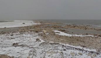 Google lanza una campaña para hacer consciencia sobre el cambio climático. Foto: Especial