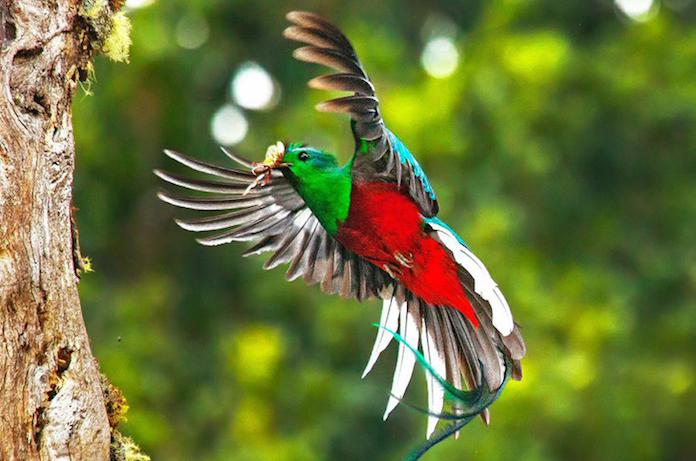 Q Significa Parrot El quetzal, animal mes...