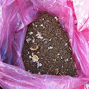 Semillas de amapola listas para sembrarse ilegalmente en Guerrero