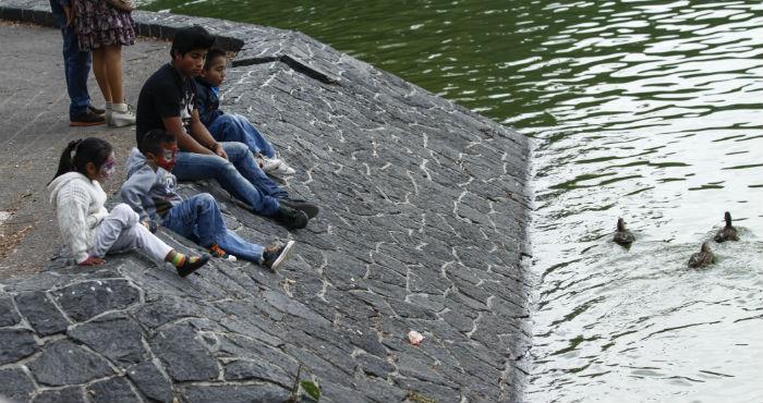 Los peces se encontraron en el lago de la segunda sección de Chapultepec. Foto: Cuartoscuro