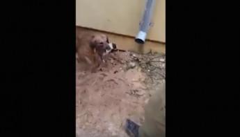 perra rescata a sus cachorros de ahogarse. Foto: Especial