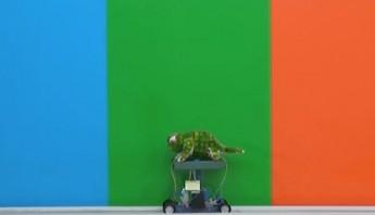 Robot camaleón. Foto: Especial