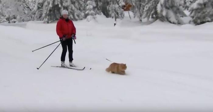 Resultado de imagen para Jesper, el gato de esquí
