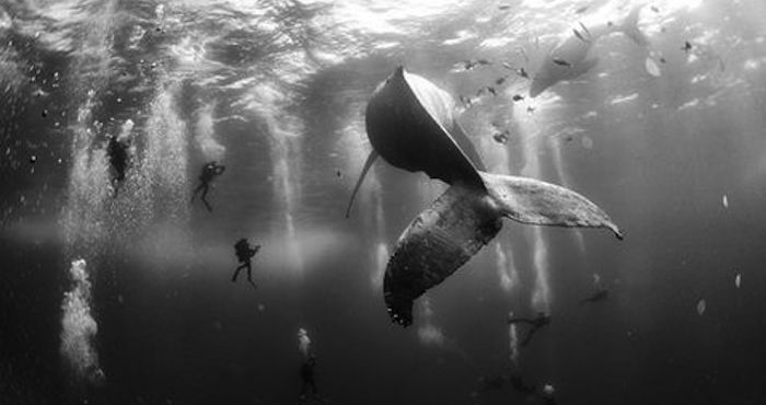 "Foto: ""Whale whisperers"" de Anuar Patjane Floriuk/World Press Photo 2016."