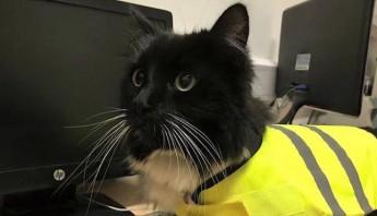 Foto: Facebook, Felix the Huddersfield Station Cat