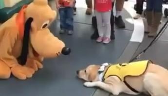pluto y perro