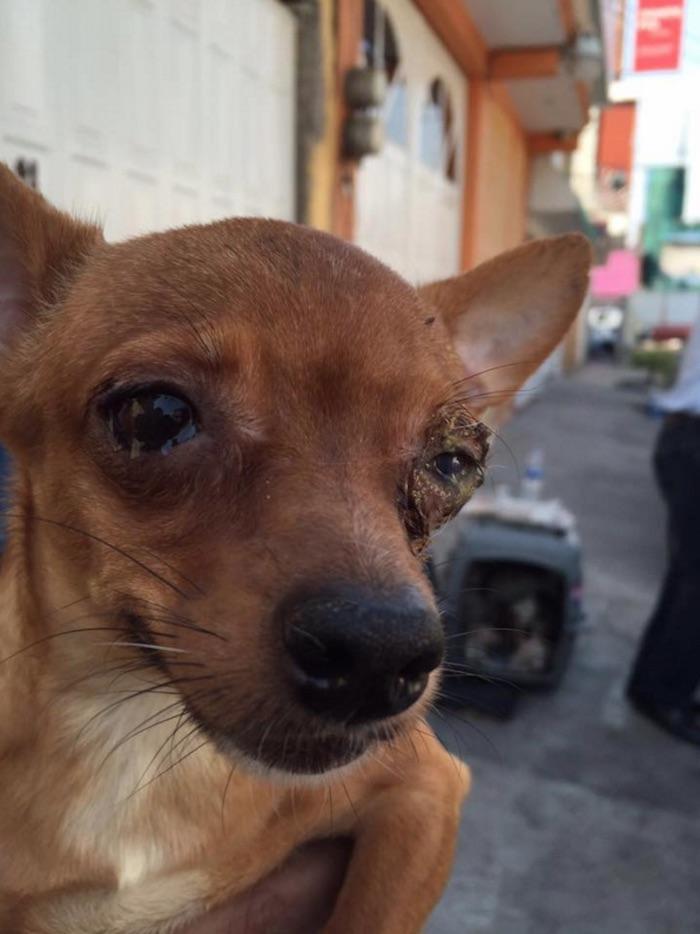 Muchos de los cannes rescatados presentan diversas enfermedades. Foto: Facebook Dogin Hood