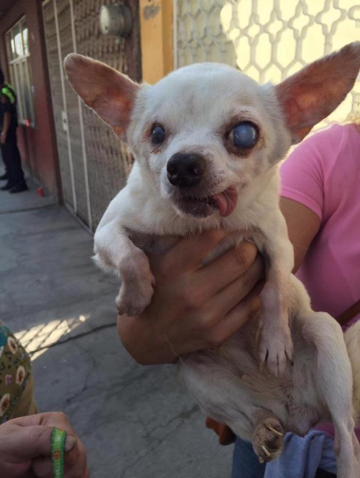 Cerca de una decena de perros se encuentran en estado crítico de salud. Foto: Facebook Robin Hood
