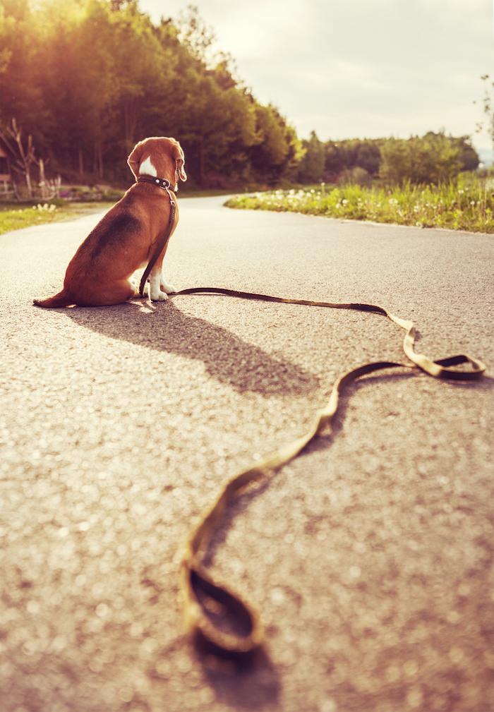 ¿No tienes tiempo de atender a tu perro? Mexicanos crean una app que puede interesarte. Foto: Shutterstock.