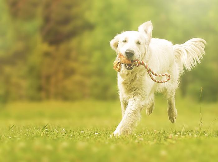 Paséame es un innovador proyecto que otorga a los clientes tranquilidad por el cuidado de sus perros y mayor seguridad en los animalitos. Foto: Shutterstock.