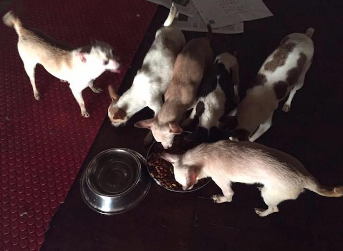 ONGs y universidades cuidan de los animales rescatados. Foto: Facebook.