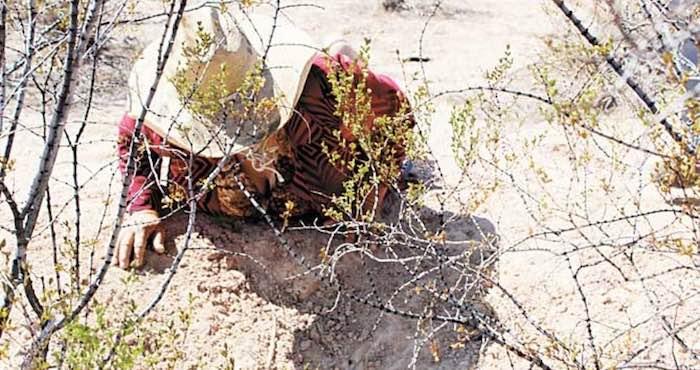 En la imagen, Coty trata de llamar a alguna tortuga a través de bufidos. Hace 20 años así las llamaban para cazarlas. Foto: Francisco Rodríguez, Vanguardia.