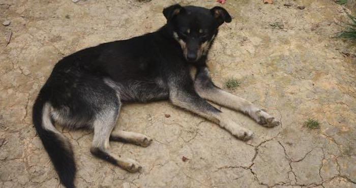 En la imagen, uno de los cuatro integrantes caninos de la familia de don Macario. Foto: BlogExpediente.
