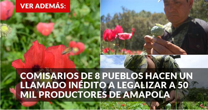 promo Amapola
