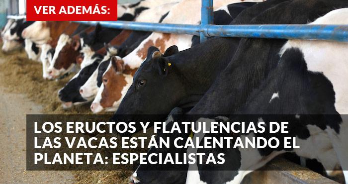 promo_vacas
