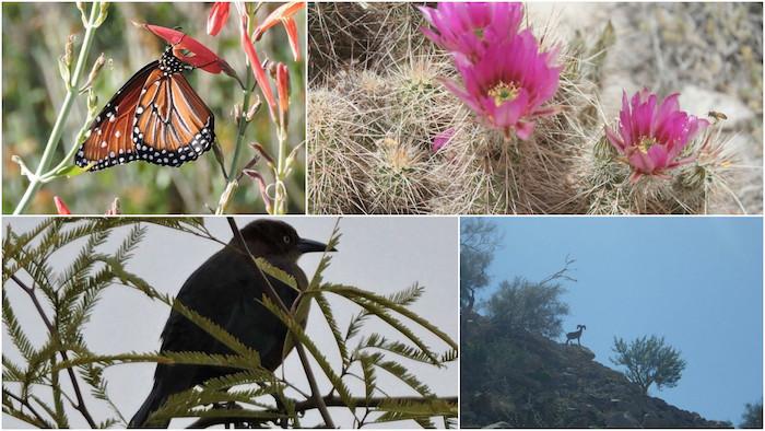 Parte de la fauna del lugar. Fotos: Facebook, @Sierra.Cucapa